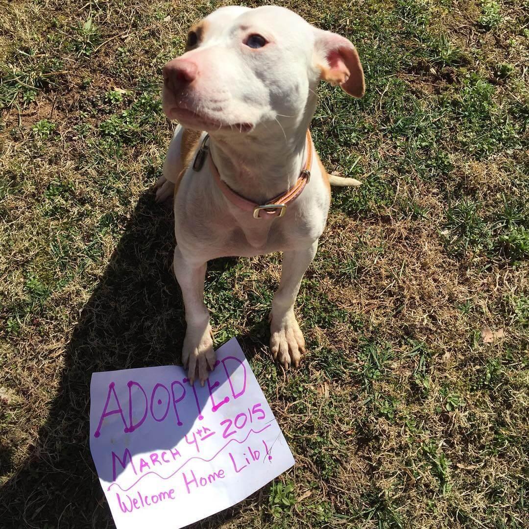 adopt don't buy