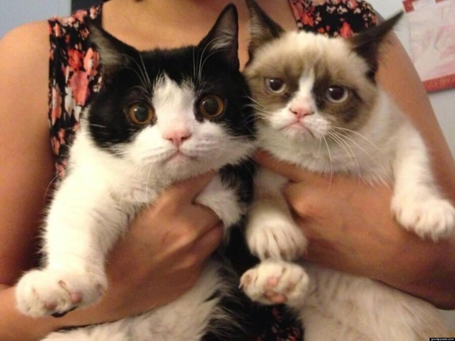 o-GRUMPY-CATS-BROTHER-POKEY-facebook-84214-36804.jpg