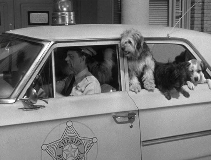 dogs-1.jpg