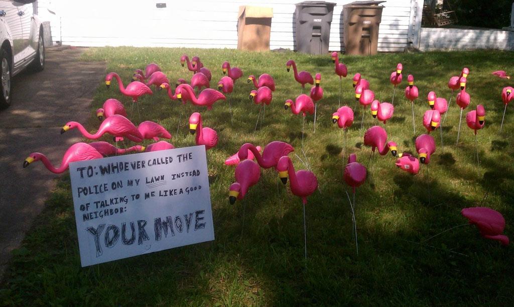 flamingo-invasion