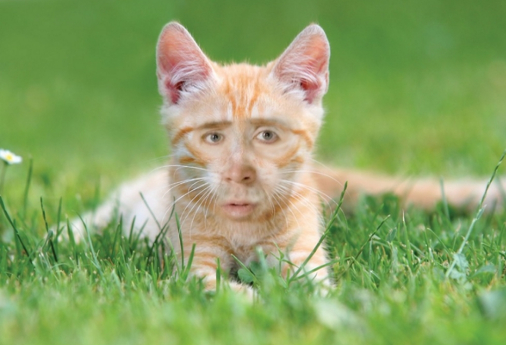 nic cage 19