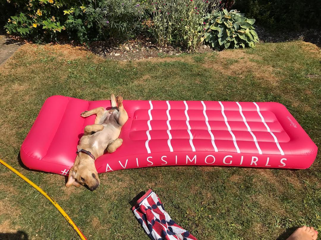puppy laying in cup holders part of bravissimo pool float