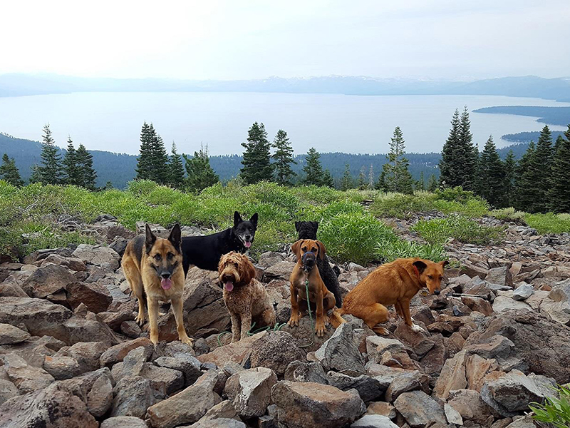 Mick's dogs gather on rocks overlooking a lake view from a mountain