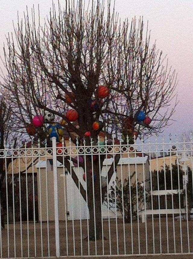 Balls In Tree