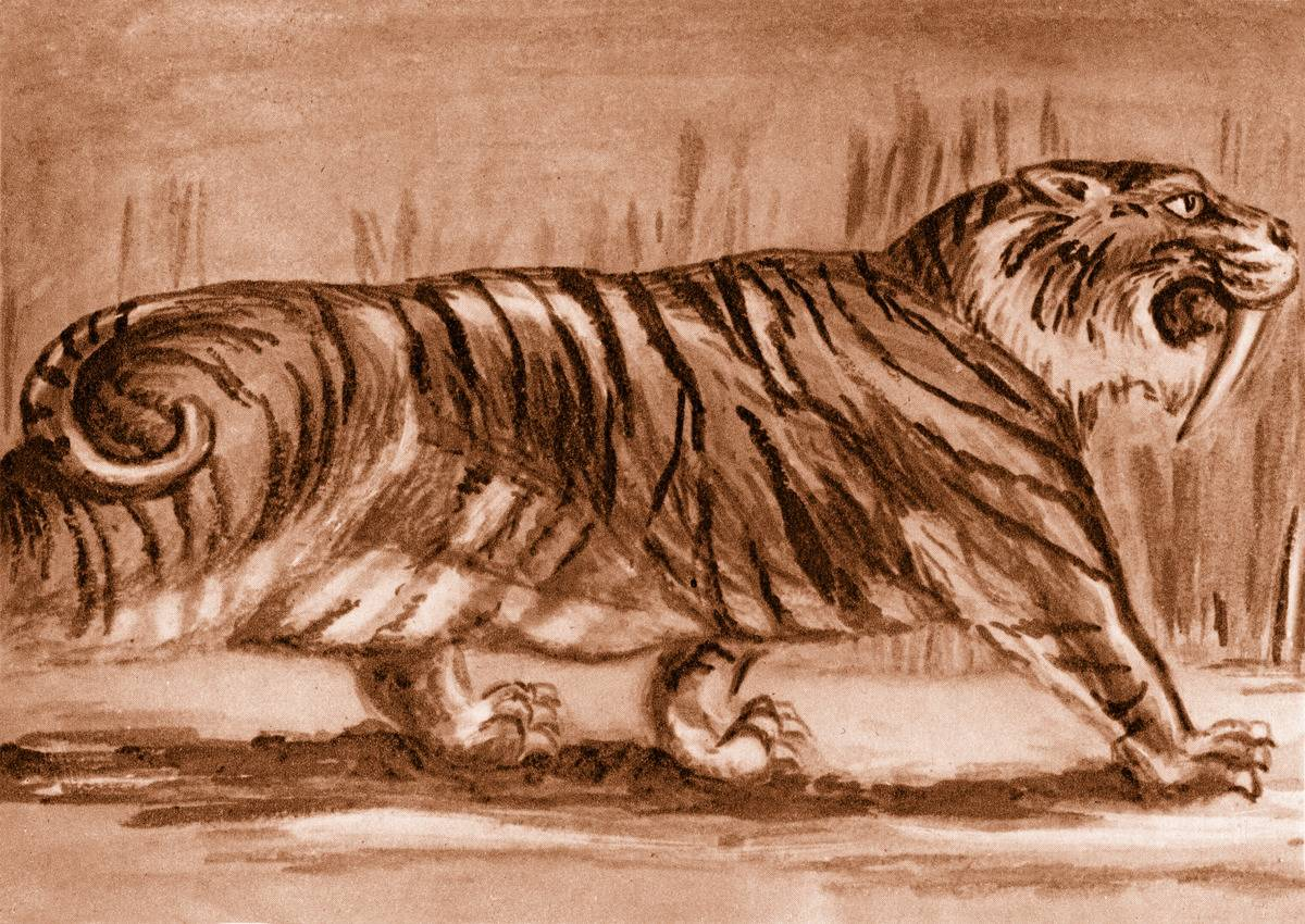 a painting of a sabre toothed tiger