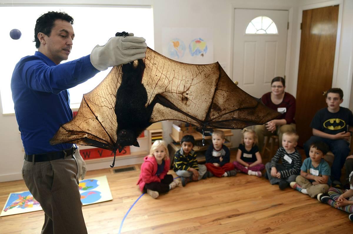 A bat expert shows a flying fox to a class.