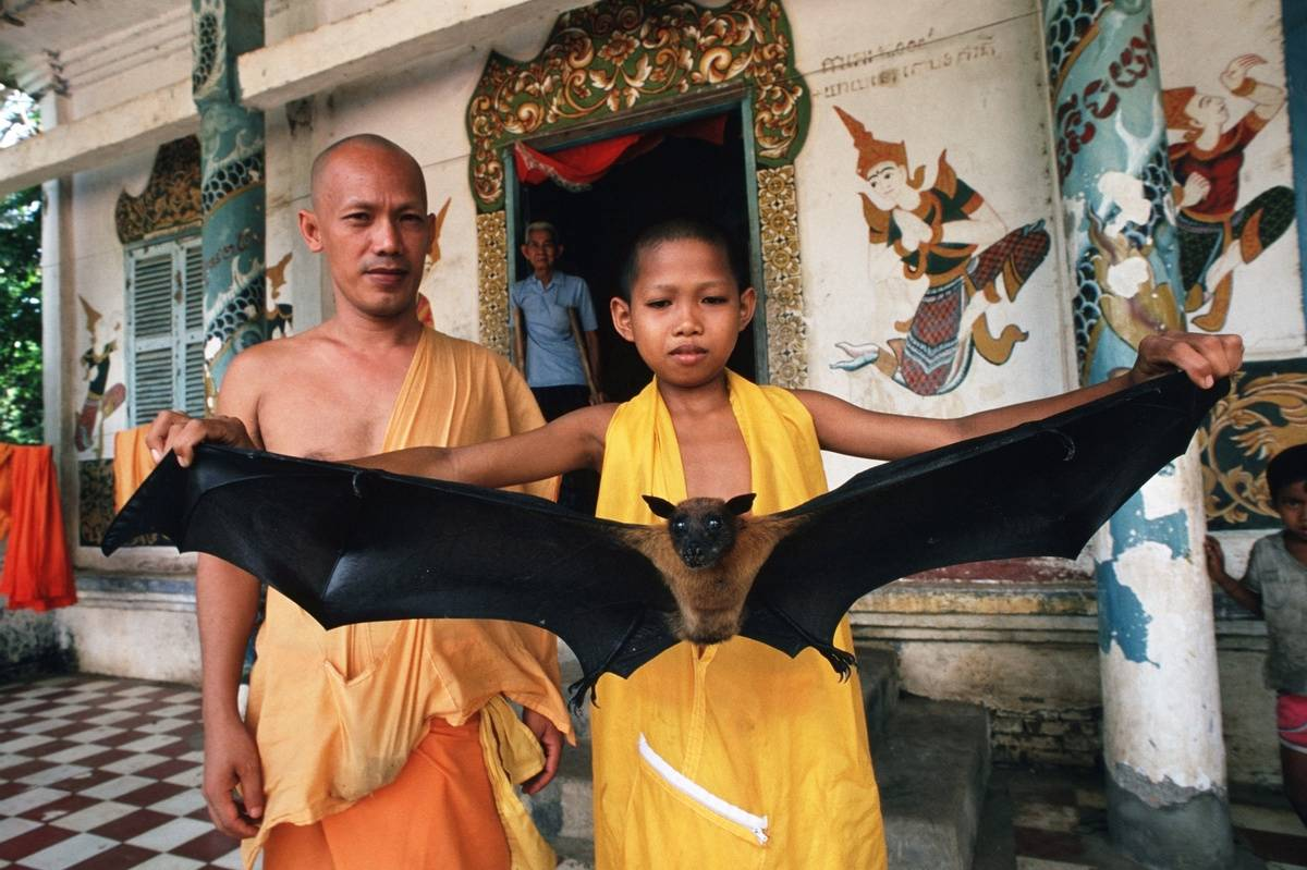 A young monk holds out a bat with a one-meter wing span.