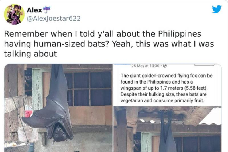 A twitter user posts about a flying fox.