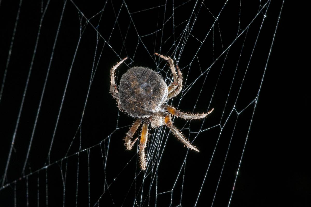 3.5%-6.1% Of The World's Population Have Arachnophobia