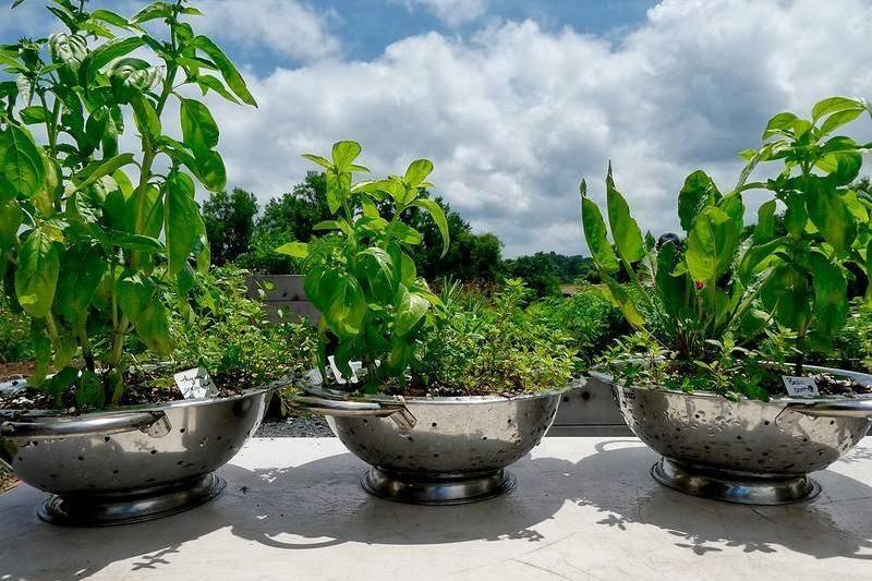 Make A Planter With An Old Colander