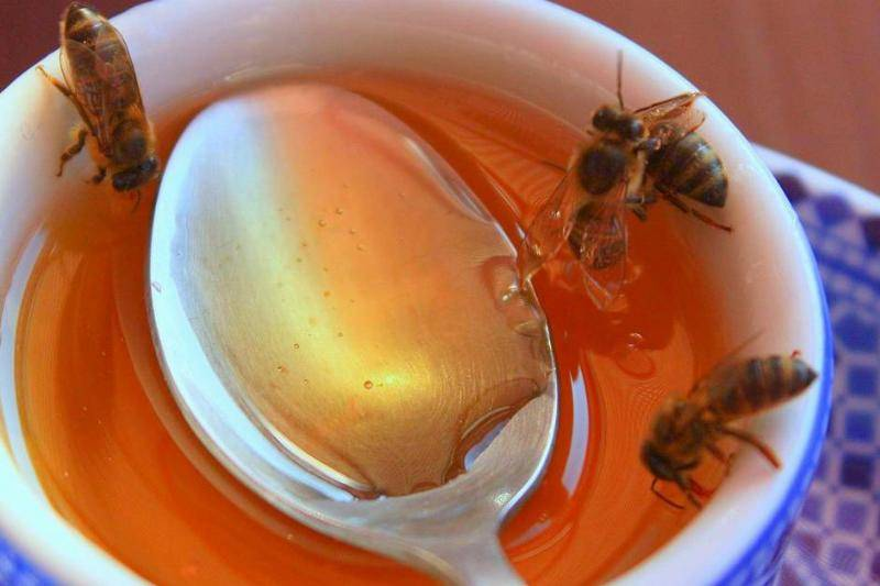 Use Honey To Root Cut Plants