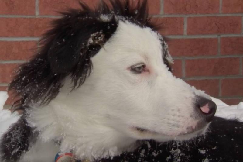 Vango the dog is seen sitting in snow.