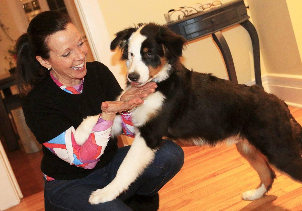 Owner Josée Francoeur plays with her dog, Vango.