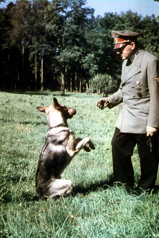 Historical Dogs: Will They Be Remembered?