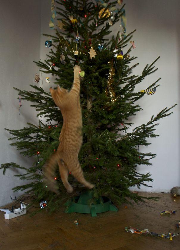 The Christmas Tree Lights on Fire