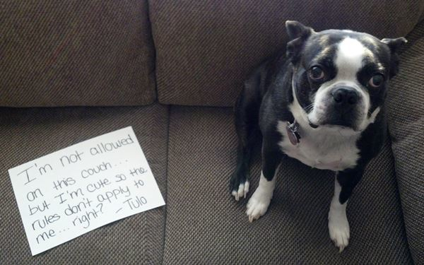 The Couch Squatter