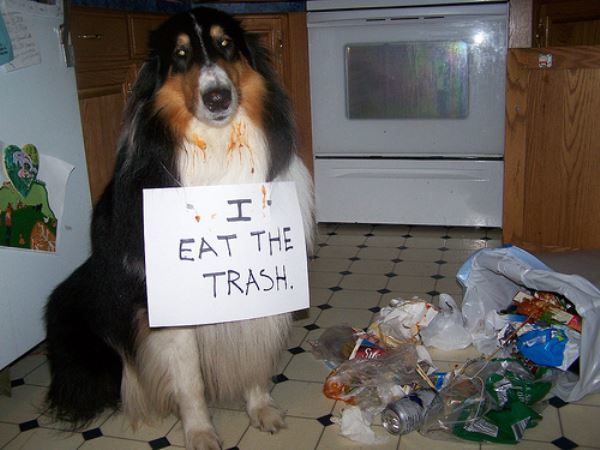 The Trash Eater