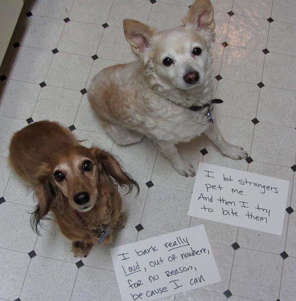 The Untrained Dogs