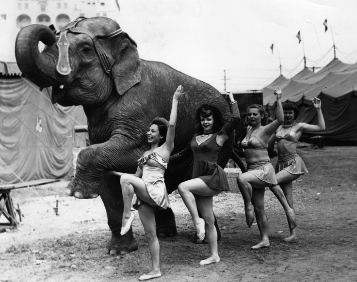 Long Battle to Remove Elephants from Circus
