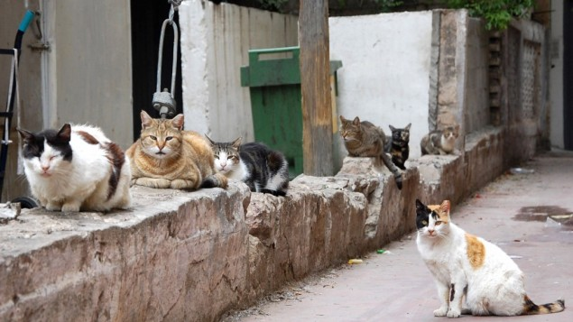 You Can Definitely Divorce Your Wife If She Brings Home 550 Cats