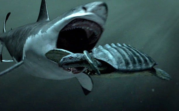 Discovery Channel Got Flak for a Fake Shark Week Documentary