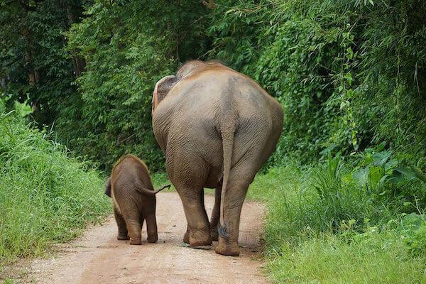 Barnum-and-Bailey-Baby-Elephant.jpg