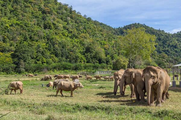 Elephant-Farmning.jpg