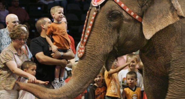 Elephant-Treatment-and-Feld-Entertainment.jpg