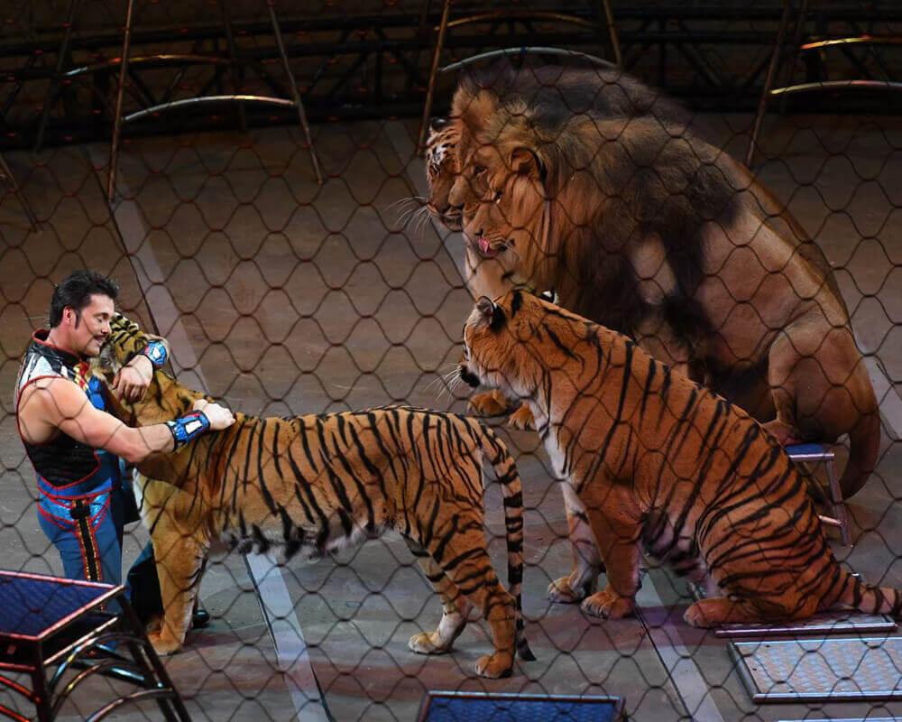 bye-bye-tigers.jpg