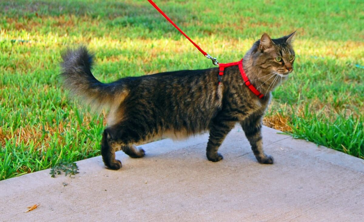 cat walking coaches.jpg