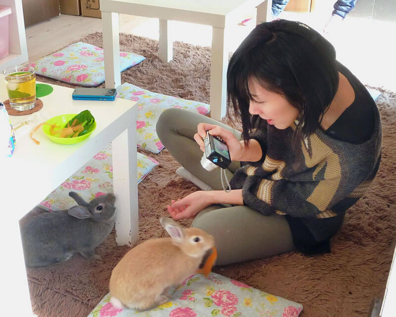 Bunny Cafes Let You Play With Rabbits While You Eat
