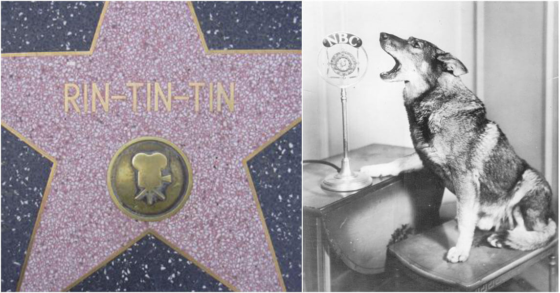 rin-tin-tin-star-hollywood.jpg