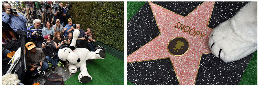 snoopy-walk-of-fame.jpg