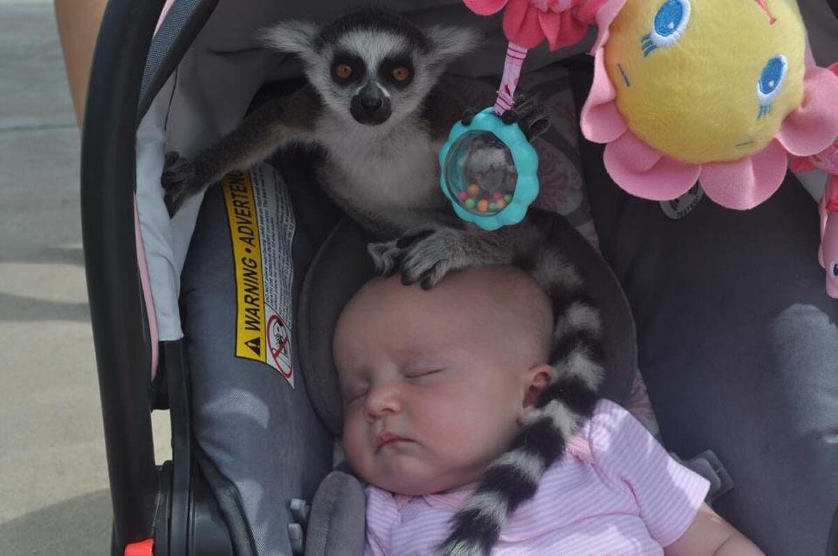 baby-lemur-head.jpg
