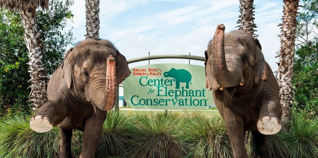 elephant-conservation-center.jpg